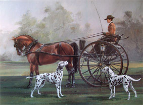 dalmata-e-carrozza
